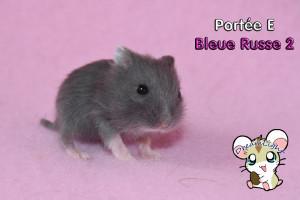 E - Bleu Russe 2 16