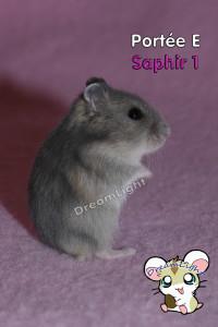 E - SAPHIR 1 (4)