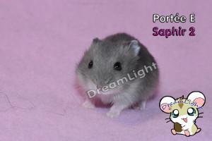 E - SAPHIR 2