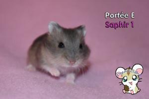 E - Saphir 1 17j