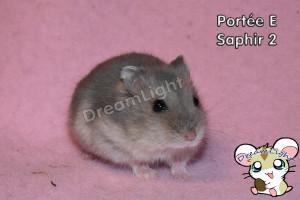 E - Saphir 2 25j (1)