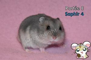 E - Saphir 4 26j (2)