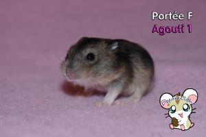 F - Agouti 1 13l