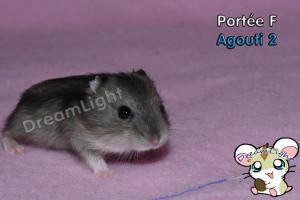 F - Agouti 2 (5)