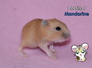 F - Mandarine 1 12j (9)