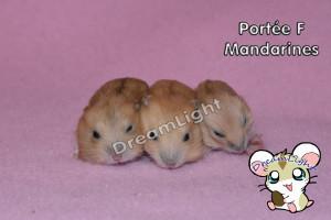 F - Mandarines 14j