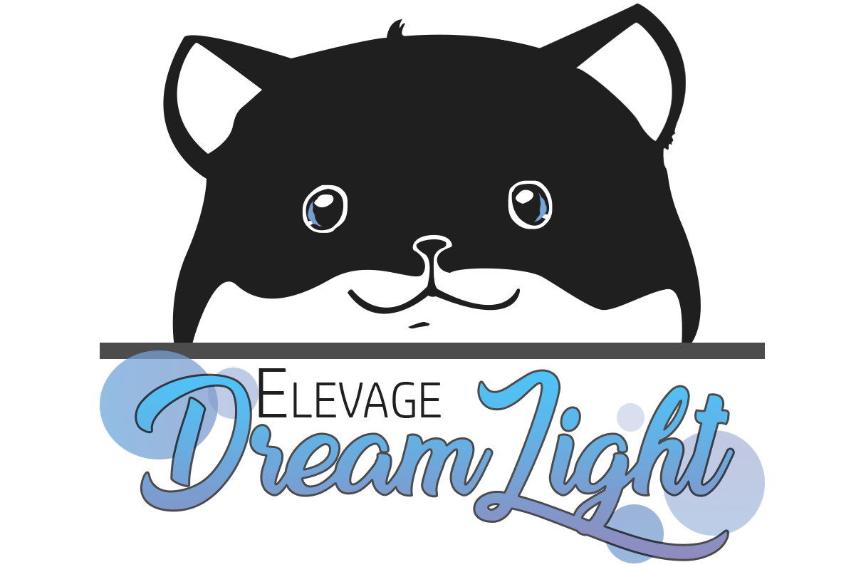 DREAMLIGHT